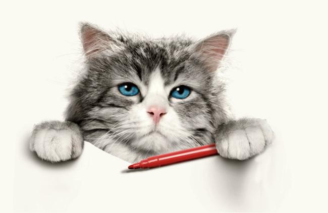 Выкройки одежды для кошек своими руками: лучшие идеи