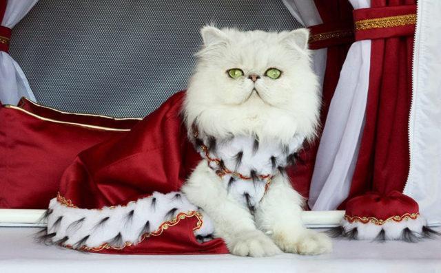 Одежда для кошек своими руками: полезные советы
