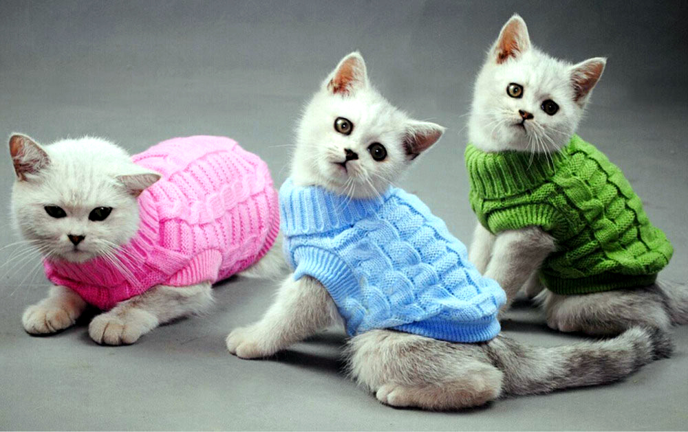 Зачем кошкам нужна одежда?