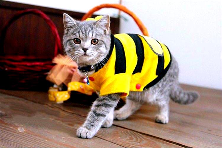 Виды одежды для котов и кошек