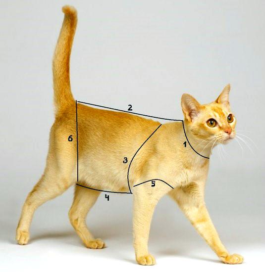 Схема мерок кошки с цифрами