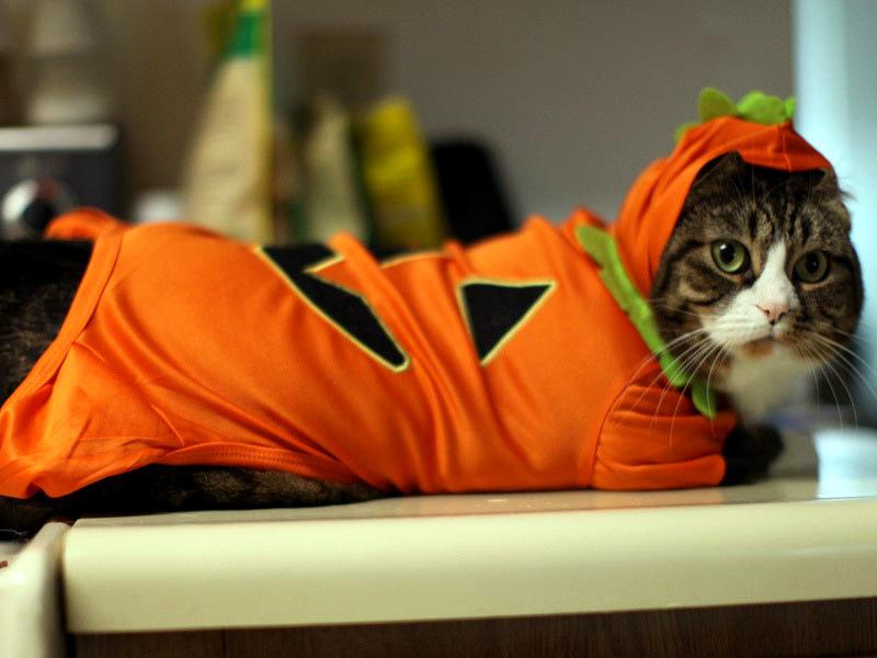 Как выбрать выкройку для кошачьей одежды