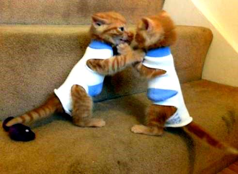 Простая выкройка одежды для кота своими руками